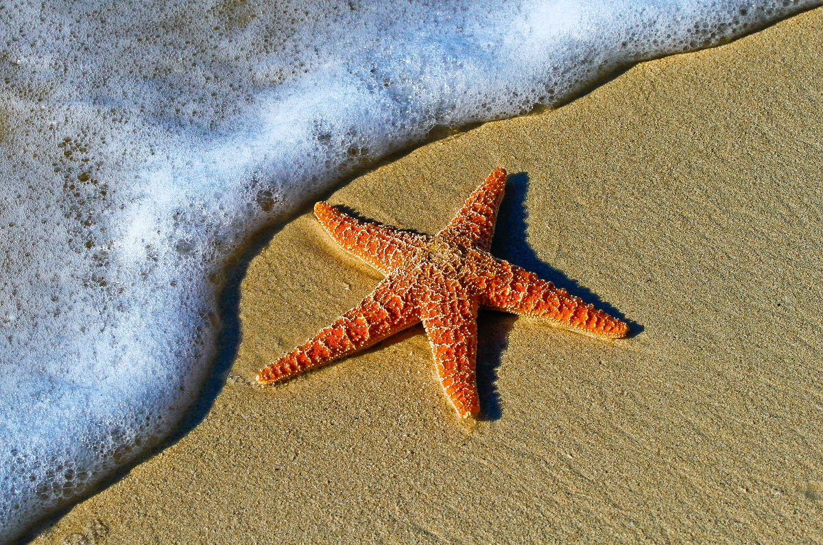 075 Deep Connections Part 1 – The Boy and the Starfish